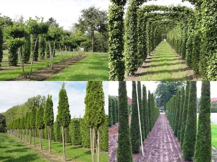 LOGO_Norditerrane Pflanzen – Winterharte Pflanzen mit südlichem Flair