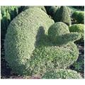 LOGO_Topiary
