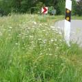 "LOGO_Mischung ""Böschungs- und Straßenbegleitgrün"""
