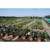 LOGO_Komplettes Gartenpflanzensortiment von A-Z / Stein- und Holzprodukte