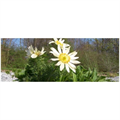 LOGO_Heimische Blütensteppe - Staudenmischpflanzung