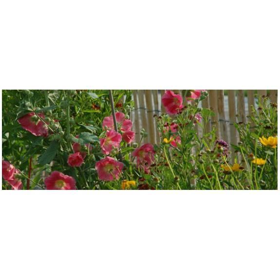 LOGO_Bunte Landhausblüte - Staudenmischpflanzung