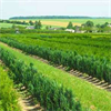 LOGO_Heckenpflanzen