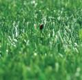 LOGO_Kunstrasen Fivestargrass