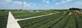 LOGO_Pflanzen-Verkauf