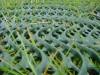 LOGO_TERRAM GrassProtecta – Rasenschutz Gitter