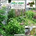 LOGO_Sellana-Pflanzenziegel(R)