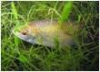 LOGO_Brackish Water Fish