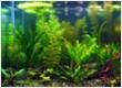 LOGO_Aquatic Plants