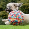 LOGO_PetBloon - Big Fun Balloon Play for Dogs
