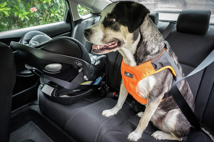 LOGO_Clickit Terrain safety harness