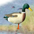 LOGO_Standing Full Body Foldable Mallard Decoy