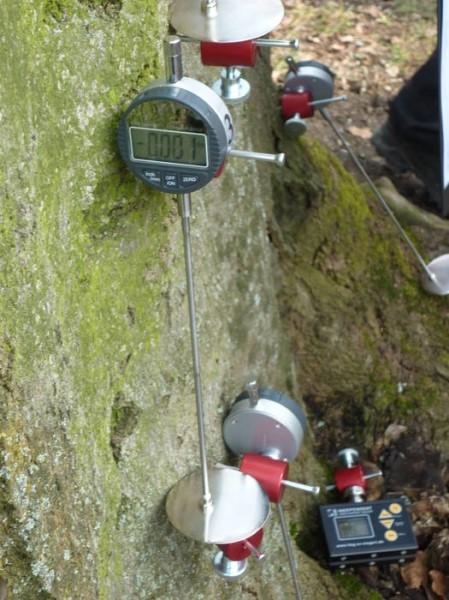 LOGO_Gutachten zur Stand- und Bruchsicherheit von Bäumen