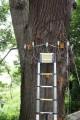 LOGO_Beweissicherung bei Schäden und Baumwert-Gutachten