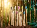 LOGO_Humble Brush