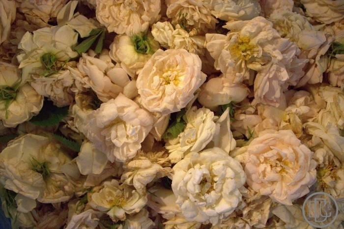 LOGO_Organic Rose Alba water