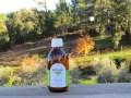 LOGO_PROENTIA Pinus pinaster Organic Essential Oil
